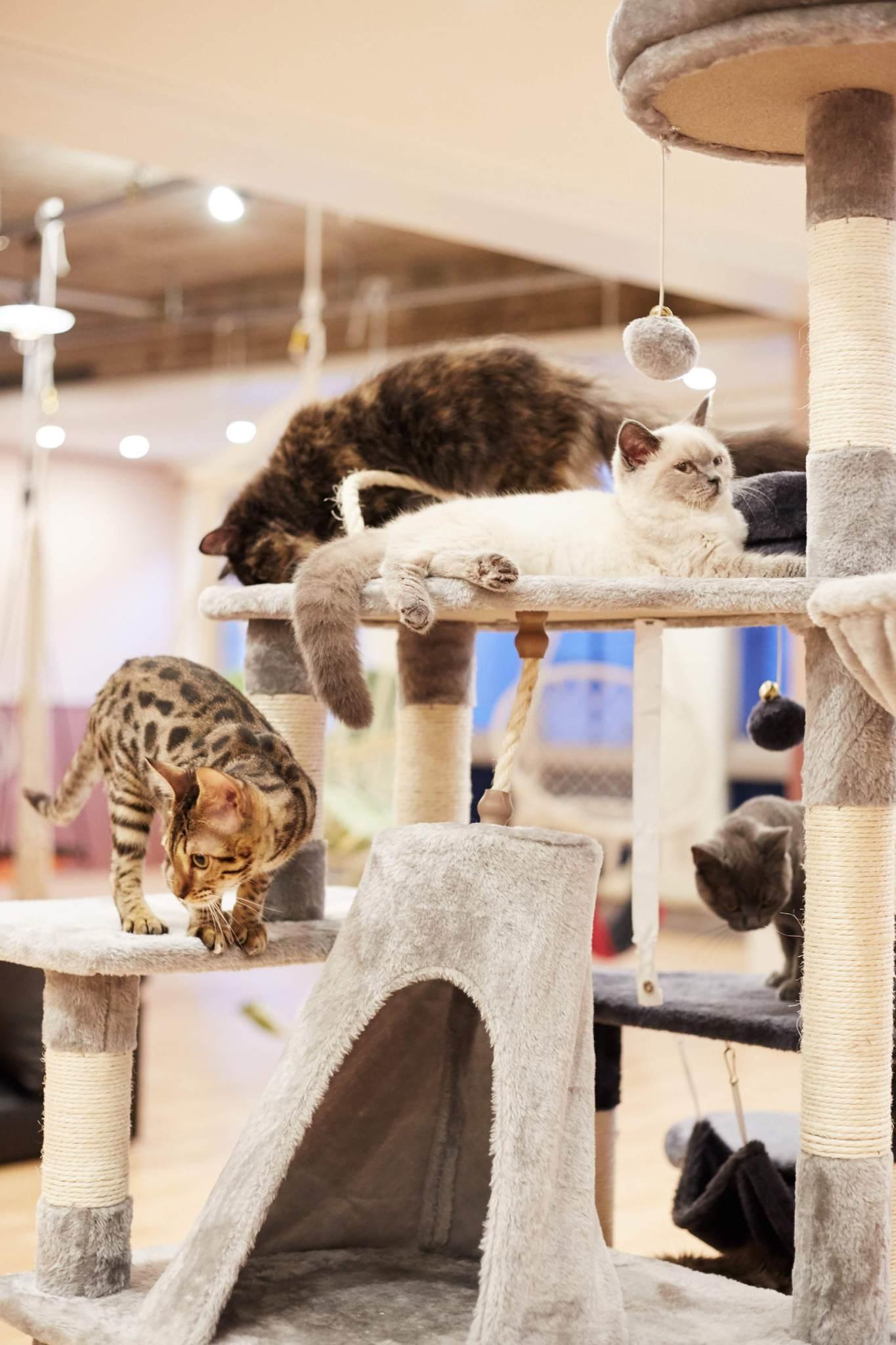 【好評開催中!】ぷちまり大作戦!猫ちゃんからのミッションをクリアせよ!【4/20-5/6】
