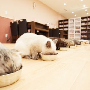 For foreign customer. We are Cat Cafe PuchiMarry♡ The Best Cat Cafe Experience in JAPAN.