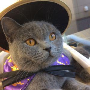 【ラソラ札幌店】ハロウィンインスタキャンペーン×猫カフェPuchiMarryフォトコンテスト☆