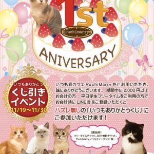 【11/19(月)から】猫カフェPuchiMarry1周年記念イベント開催決定!!
