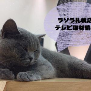 猫カフェPuchiMarryラソラ札幌店がHTB北海道テレビ「情報ビュッフェ」さんに取材して頂きました!