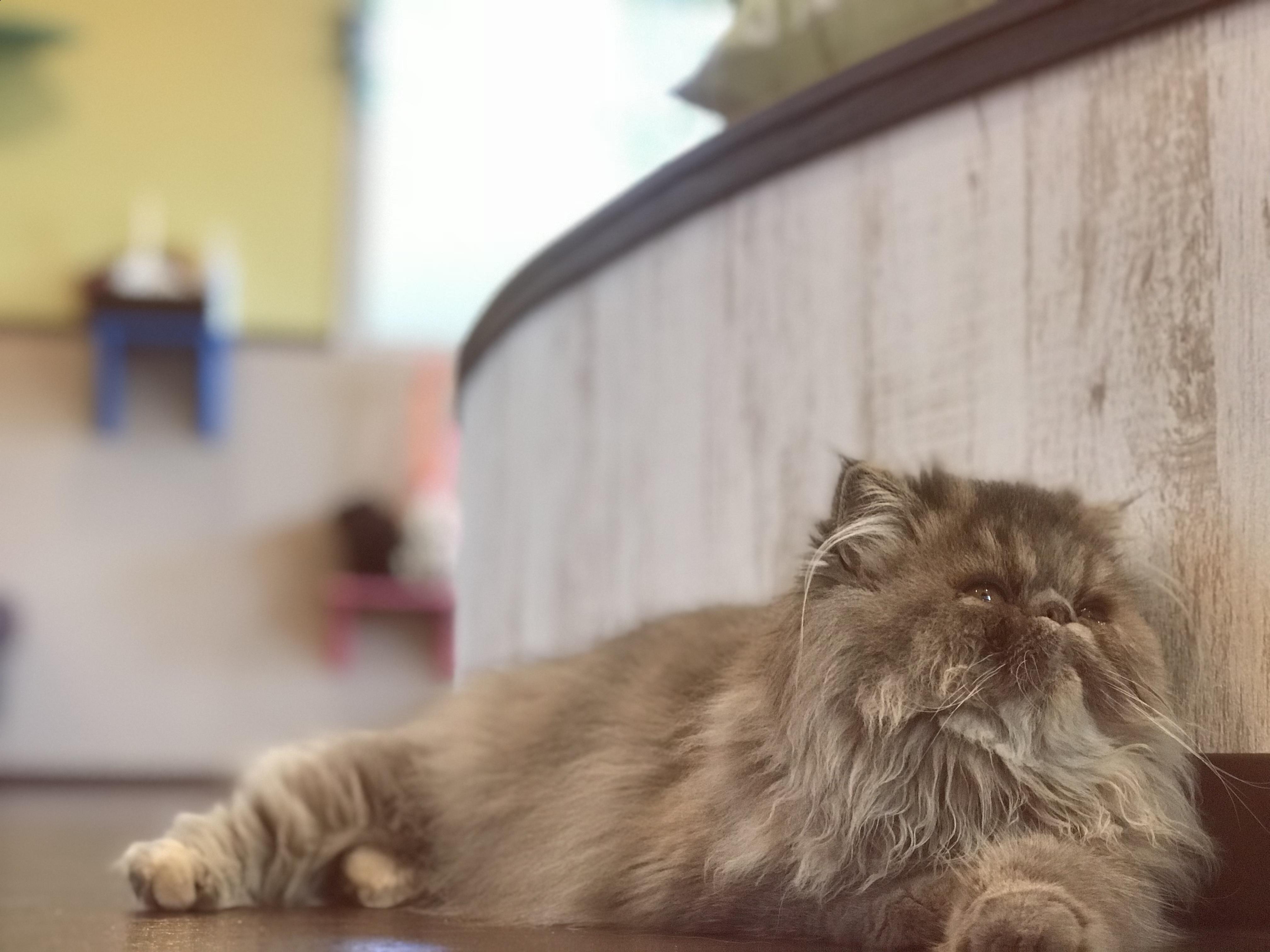 猫カフェ 名古屋 大須