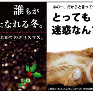 ラソラ札幌×猫カフェPuchiMarryクリスマスイベント開催中!