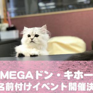 【1月7日(月)より】猫カフェPuchiMarry函館MEGAドン・キホーテ店にてお名前付けイベント開催!