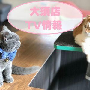 【猫カフェPuchiMarry名古屋大須店】1/8(火曜)東海テレビ「スイッチ」さんにて放送予定!