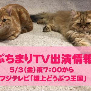 【5/3(金曜)19時から!】「坂上どうぶつ王国」さんに猫カフェPuchiMarryが登場しますっ!
