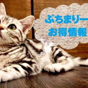 【猫カフェPuchiMarry】開催中キャンペーン情報☆