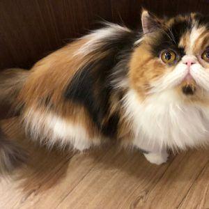 猫カフェPuchiMarry六本木店【閉店のお知らせ】