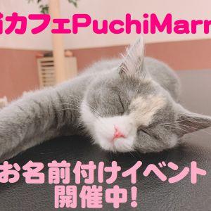 猫カフェPuchiMarryで子猫ちゃんたちのお名前付けイベント開催中!
