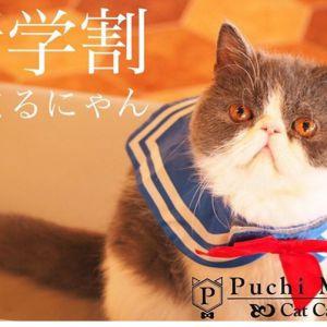 【熊本・函館】ぷちまり猫ちゃんTikTokデビュー☆【沖縄北谷】
