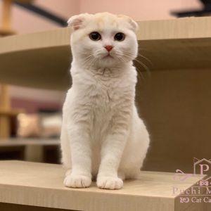 【Newオープン‼】8/3(土)石川県イオンモールかほくに猫カフェPuchiMarryがオープン致します✨