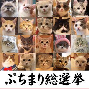 第2回ぷちまり総選挙予選開幕☆