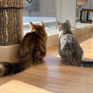 ラソラ札幌店が「猫カフェナビ」さんに紹介されました!