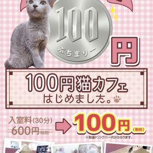【本日より開催!】函館店限定☆100円猫カフェキャンペーン!