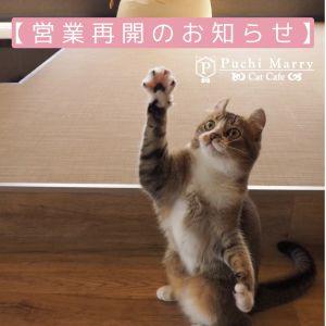 【営業再開店舗のお知らせ】